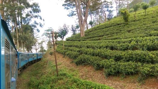 Tea Train 3
