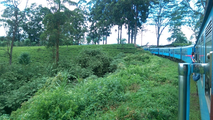 Tea Train 4